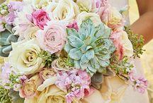 Amy&Dan / Amy & Dans wedding inspiration ✨ / by Michelle Colyar