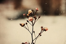 Just Pretty / by Lauren