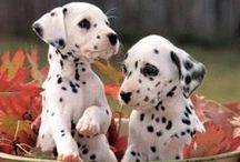 PETS. / Spoiling man's best friend. / by Kate Watson