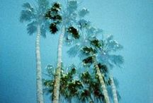 Forever Champagne // The Palms / * palm trees inspiration