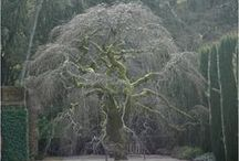 Simply Trees / Trees are very fascinating in all seasons, shapes and sizes.