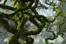 Marvelous Moss / I love moss and the fact that it is a living organism.  Everything mossy will be my pins.
