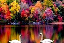 Color! / Color inspiration and appreciation.