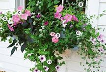 gardens and flowers / curb appeal -- front porch ideas -- container gardens -- landscaping ideas --  edging your yard -- flower arrangement ideas -- vertical gardens -- pathway ideas