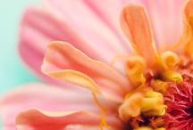 Flowers & misc macro pics