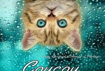 Collection Top Pic Animaux : Chats 2 / Pour faire un Don PayPal :cantinmarc@gmail.com ** All donations are appreciated,whether small or large PAYPAL https://www.paypal.com/ca/mrb/pal=N7EC6QVR9PE8S cantinmarc@gmail.com http://marccantin.com