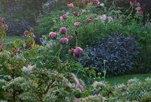 garden/plants/flowers
