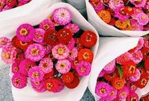 Floral Display & Blossoms / How to prettily display flowers.
