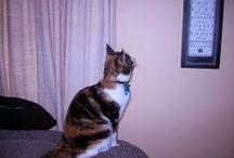 CATs don't bark  ≧◠◡◠≦✌ / Ailurophilia Jungle Corner ≧◠◡◠≦✌ #cat #cats