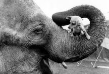 Animal & Petologie / by Tante Jo(landa)