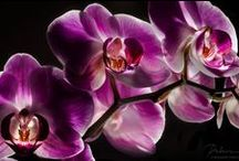 Orchidaceous✿◕ ‿ ◕✿  / Ostentatious exotic flowers from the wild forest into our doorstep.