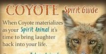 Animals: Coyotes / Coyotes live in all 48 contiguous states.  Including cities, rural and country.   Coyote - the trickster.  Yes, my last name REALLY is Coyote.   Yes, we really did raise a coyote.