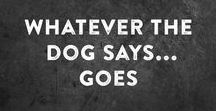 Animals: Dog Quotes / My dog board grew and grew, so I decided to break it into several boards. This board contains dog quotes, no images of dogs.