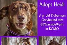 Adoptable Dogs, Cats & Horses / Adopt, don't shop for you next pet.  Pets here are available for adoption from animal shelters and rescues. / by Sue Kottwitz