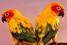 Facebook Timeline Covers - Birds