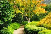 Gardening / by Kathy K