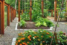 Gardening / by Michelle @ Ten June