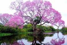 God is the Greatest Artist- Nature's Beauty / by Jennifer Sheridan