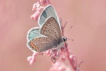 Butterflies / by Jennifer Sheridan