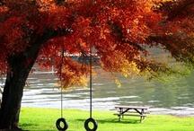 Fall / by Jennifer Sheridan