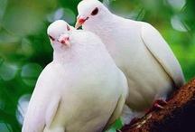 LoveBirds*.**.*