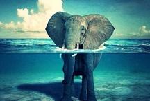 Beautifully Underwater*