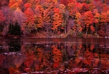 Maine and Fall, two of my most favourite things / by Heather Sanderson