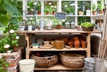 green thumb / Tips, ideas and inspiring images. / by MoniqueF