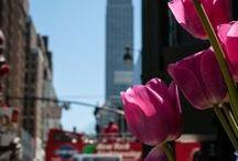 * New York City *