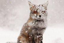 winterlicious / by MoniqueF