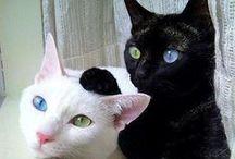 Cats - Mačky