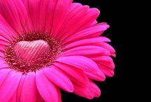 Beautiful Flowers / by Jen