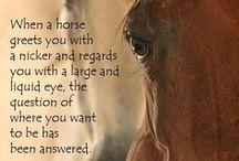 ♡ Beautiful Horses ♡ / by Toynette