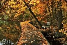 Always Autumn  / by Meghan Burns