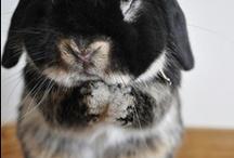 Rabbit and rabitt