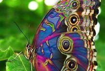 Nature / by Pat Jimenez