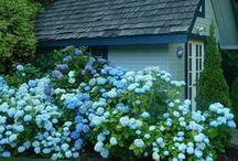 ♡ Little Bluebird Cottage ♡ / by Toynette