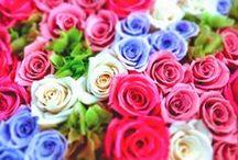 YURIKA & FLOWER