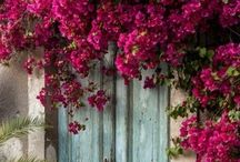 Landscaping Ideas / by Susan Bishop Holloway
