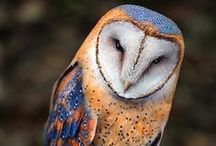 Pics: Owl-Lovely! / Images and crafts, representing owls.