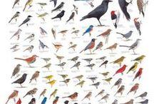 MP6: Birds of Colorado