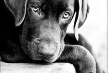 Hundeliebe / Schöne Bilder von Hunden