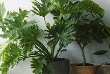 Growing: Indoor Plants / The many and varied ways of housing, displaying and nurturing plants inside the home.
