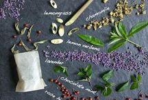 Basic & Ingredients