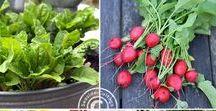 Deutsche Gartenblogger Gruppenboard / Gruppenboard über Gartengestaltung, kreative DIY's für den Garten, Tipps rund um Gemüse und Zierpflanzen, Terrasse, Balkon... alles was den grünen Daumen betrifft. Bitte nur eigene Pins! Wenn Du mitpinnen möchtest, schreibe mir eine E-Mail an: b.knoop@ambungsberg.de