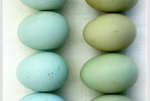 egg love  / None