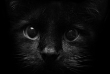 Here Kitty Kitty / Pictures of cute kitties! Funny kitties! All kinds of kitties!  / by Camille Tipps
