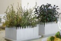 Garden:Container & Raised Beds / by Stacey Merrill
