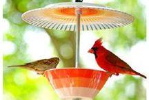 Garden: for the birds