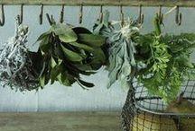 garden: edibles / by Circa Dee